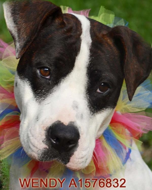 Animal Shelter Pompano Beach Fl Dogs Adoption Photos
