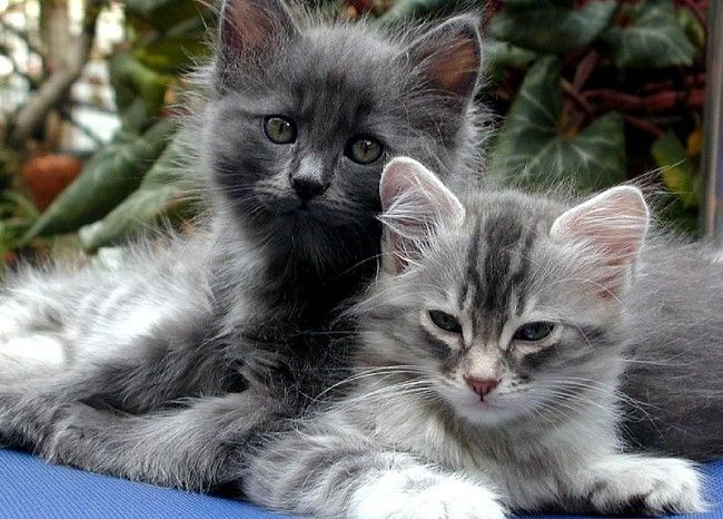 Cute cats can cause not so cute allergy symptoms