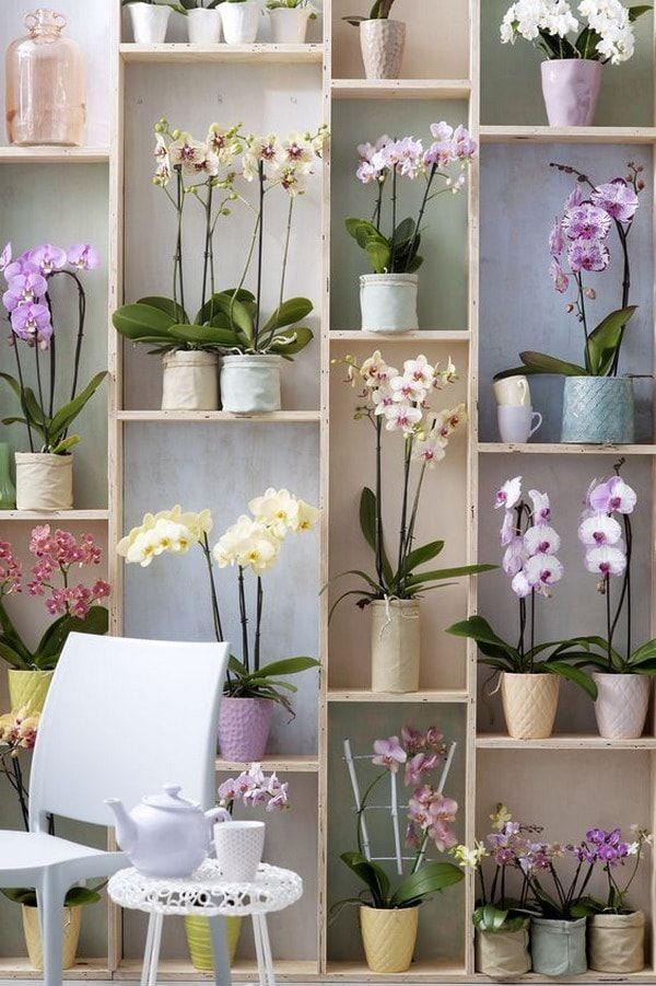 Muebles lleno de orquídeas