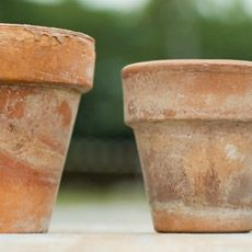 How to Age a Terra Cotta Pot | Gardens, Planters and Sprays