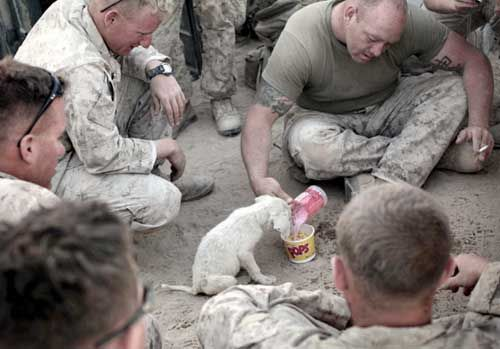 and Marines and puppies. all my favorite things.