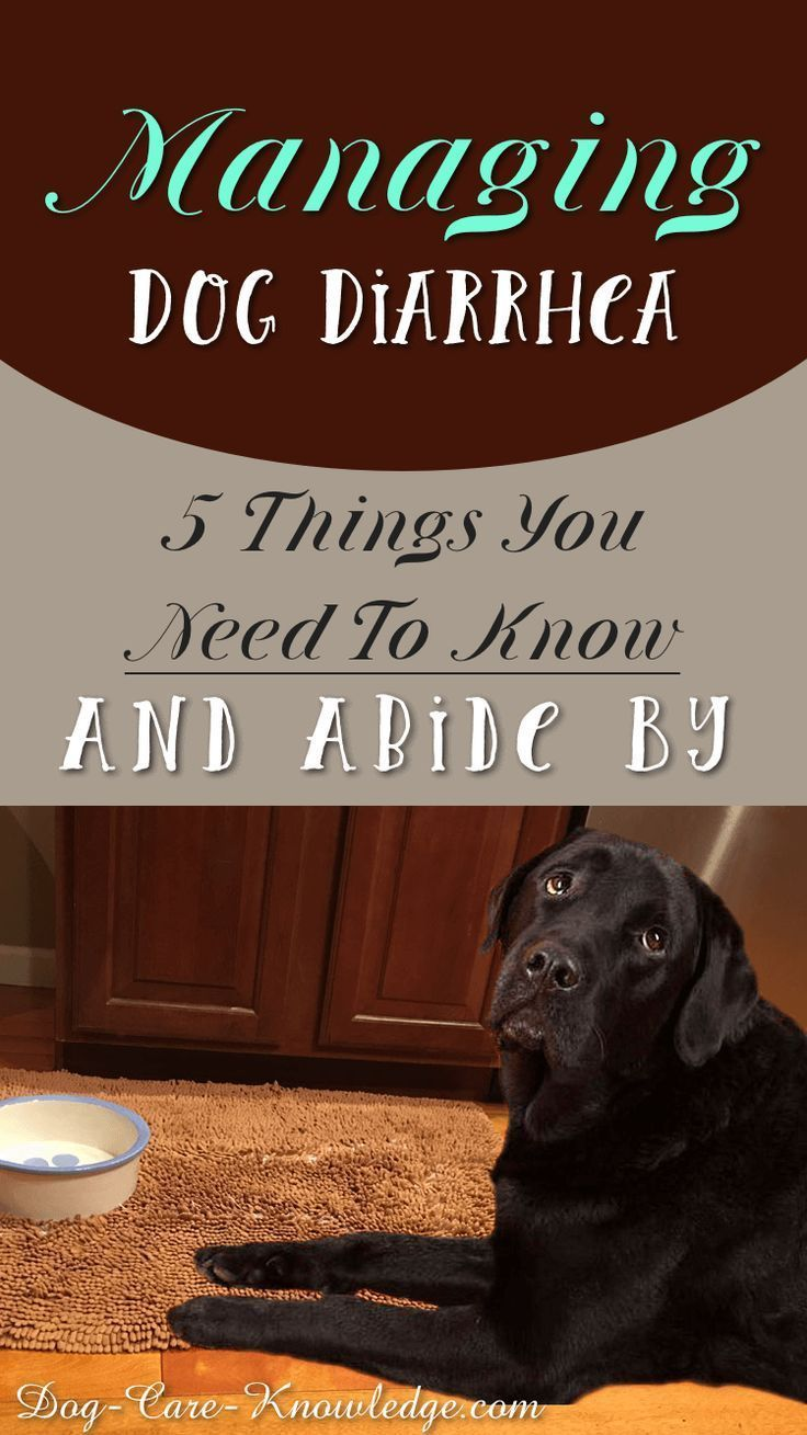 Managing Dog Diarrhea 5 Things You Need To Know And Abide By
