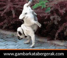 Gambar animasi binatang lucu bergerak, anjing kencing sambil standing :D