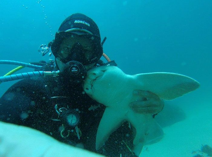 Whenever He Goes Diving, This Shark Comes To Cuddle With Him (This Has Been Going On For 7 Years)