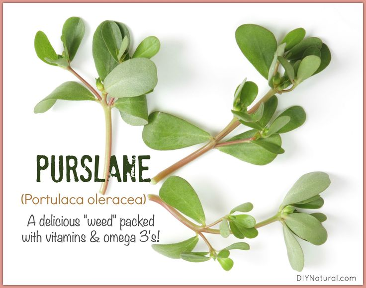 Purslane (portulaca oleracea), considered a weed to some, is quite edible. It's delicious AND high in vitamins A, B, C, and surprisingly omega-3 fatty acids!