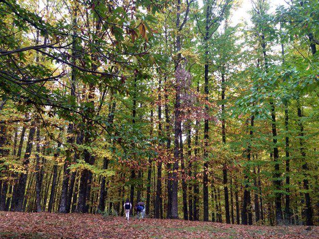 El Castañar El tiemblo, uno de los bosques más bonitos para disfrutar con los niños
