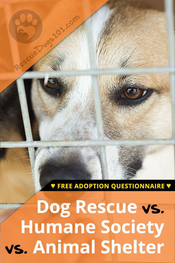 Humane Society Vs Animal Shelter Vs A Dog Rescue Rescue Dogs