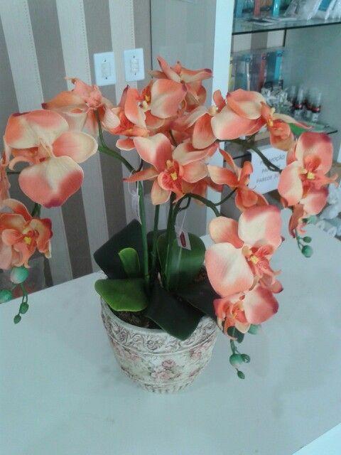 Orquídeas sempre para encantar. ....