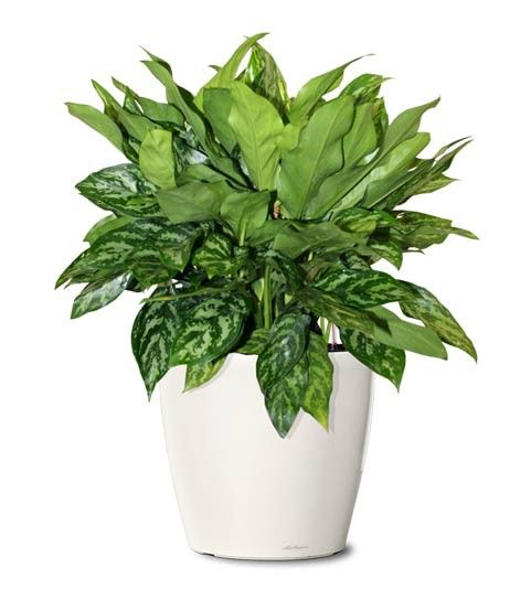 25 best ideas about indoor plants online on pinterest white ladder shelf ladder stands and - Small plants for indoors ...