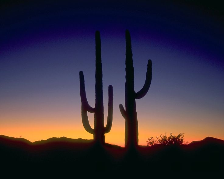 1000+ images about red lanterns & saguaro for Tucson on Pinterest ...