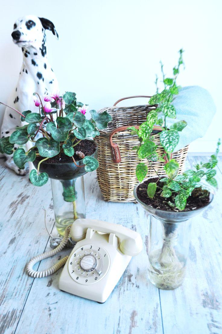 Plantas, Plantas en botellas, Diseño ecológico, Diseño sustentable, Diseño con botellas, eco diseño, plantas ornamentales, diseño de interior, plantas ornamentales, dalmata