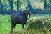 "New artwork for sale! - "" L Aquila Abruzzo Italy Horse  by PixBreak Art "" - http://ift.tt/2lZjrK4"