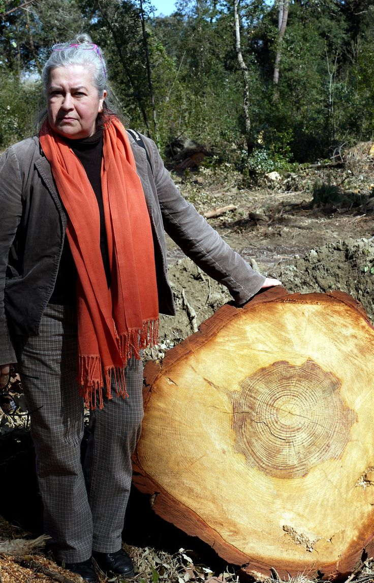 Pine nuts (Pinus pinea L., 1753) - 104 years old, and my wife 60 years old. After the great storm March 2015, Versiliana - Pietrasanta - Lucca - Italy. #guidofrilli