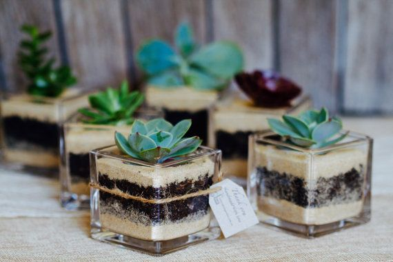 Wedding favour succulent terrarium, mini glass terrariums, wedding bombonieres, succulent wedding favours - Minimum order 50