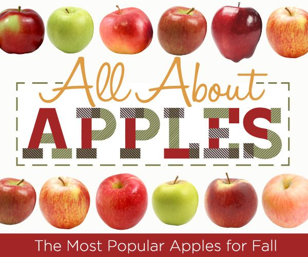 All About Apples: Best Types of Apples For Your Recipes | thegoodstuff