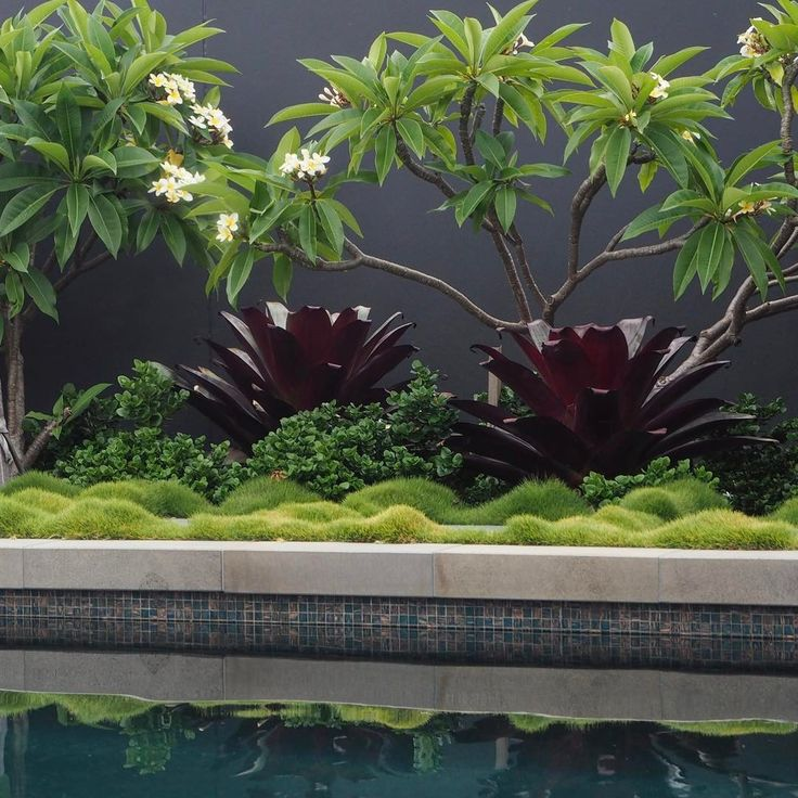 As Sydney heads into what could be the hottest temperatures this summer we all need to plan our cool down. These cooling tones poolside are already putting me in the mood. Mosman project with @_saota architects #swimmingpool #coolingoffinthepool #zoisya #frangipani #carissa #alcantarea #gardendesign #gardenarchitecture #secretgarden #secretgardens