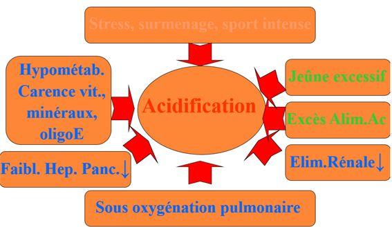 L'importance de L'équilibre acido basique   Blog Aroma Celte