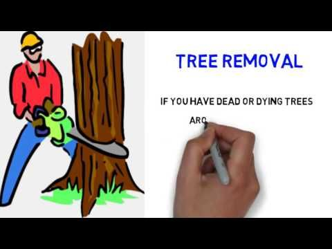 Georgetown Tree Surgeons (http://www.georgetowntreesurgeons.com) in Round Rock, Texas not only offer tree removal and tree trimming services but will also trim your hedges and sells high quality disease-free trees.