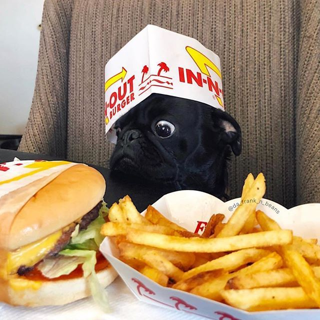Im all for extra fries not exercise! Photo by @da_frank_n_beans Want to be featured on our Instagram? Tag your photos with #thepugdiary for your chance to be featured.