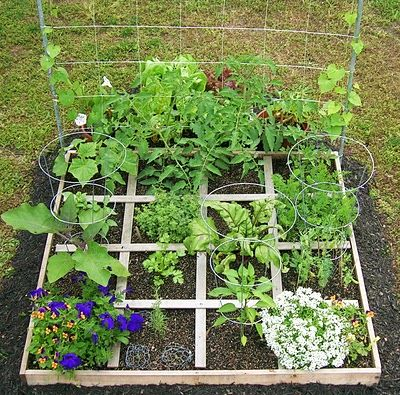 GREat week by week guide to square foot gardening!!!!!