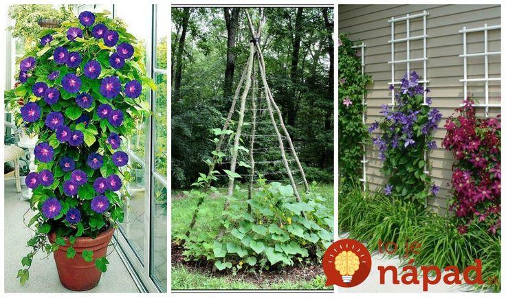 Popínavé rastliny sú prenádherné a keď im dáte správne vyniknúť, môžete ich krásu ešte viac podčiarknuť. A to nie je všetko, krásne môžu vyzerať aj ťahavé odrody zeleniny ako tekvica, uhorka ako aj vínna réva. Neváhajte a inšpirujte krásnymi nápadmi na túto sezónu.