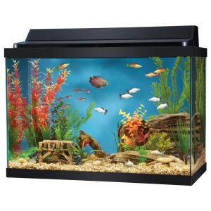 20 gallon aquarium aquarium hood and aquarium on pinterest for 75 gallon fish tank dimensions