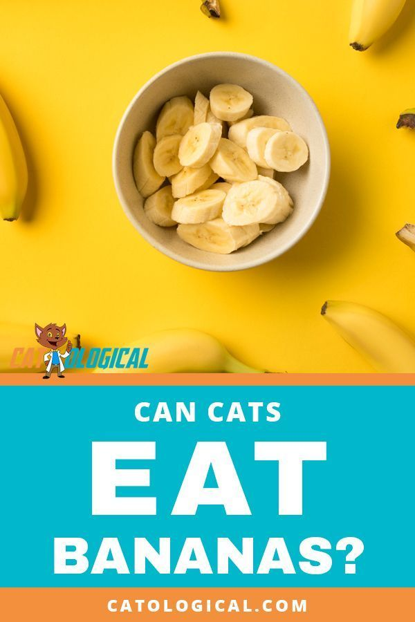 Can Cats Eat Bananas Or Are They Bad For Them Find Out If Cats
