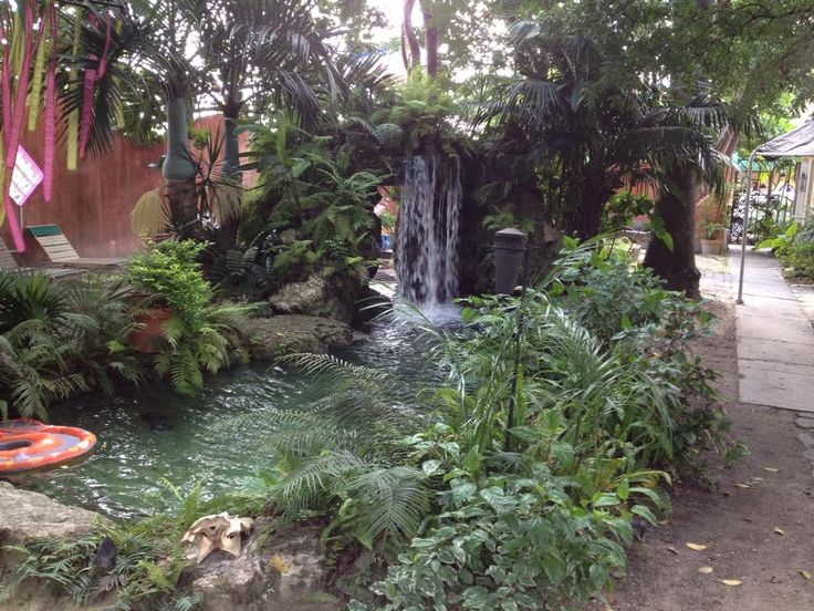 18 best Save the Urban Rain Forest at the Everglades Hostel images