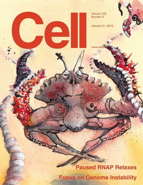 The cover image depicts RNA polymerase as a crab, with the small crab (upper right) symbolizing an elongating RNA polymerase moving along a string (i.e., DNA) and its claw, representing the clamp domain, closed. The central crab represents a paused polymerase. It is in a meditative state with its claws open, yet it keeps a grip on the string. Art by Oliver Hoeller.