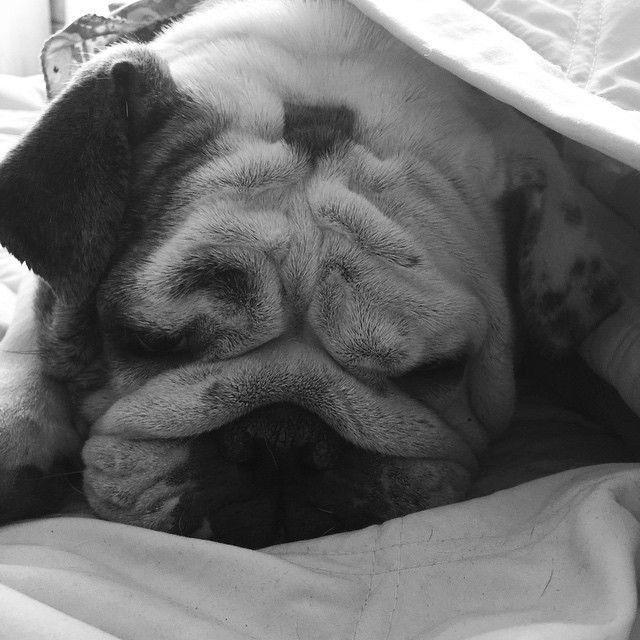 Mocchachina, mi más perro amor