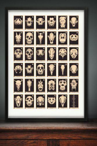 Skulls A to Z Alphabet Print - £40.00