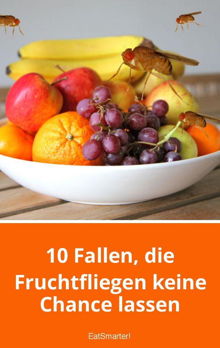 10 Fallen Die Fruchtfliegen Keine Chance Lassen Fruchtfliegen Fruchtfliegenfalle Obstfliegen