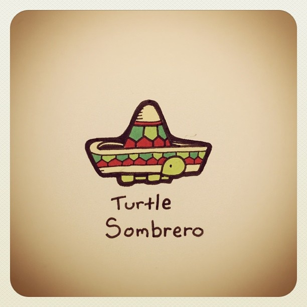 Turtle Sombrero #turtleadayjuly - @turtlewayne- #webstagram
