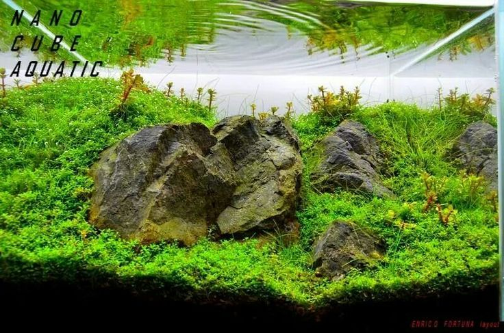 NANO CUBE aquarium Enrico Fortuna