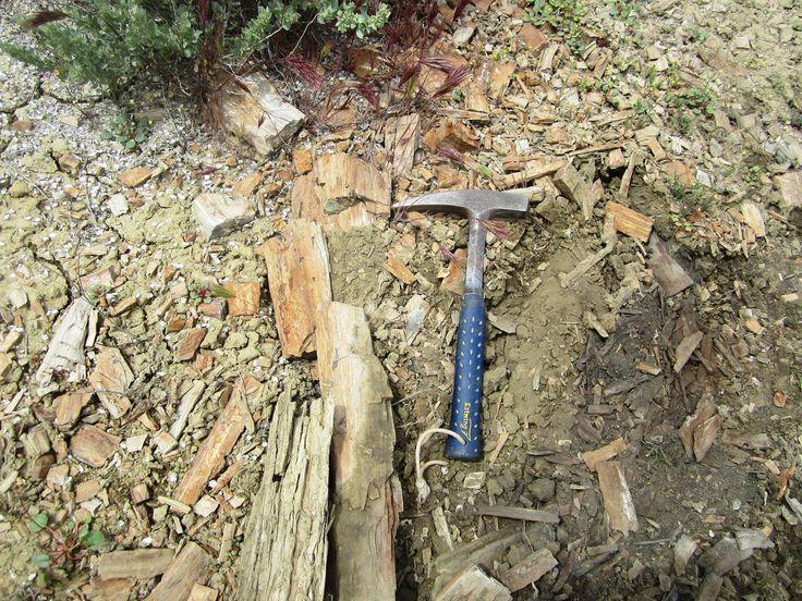 https://flic.kr/p/rGzYZ8 | Escalante National Monument | madera petrificada