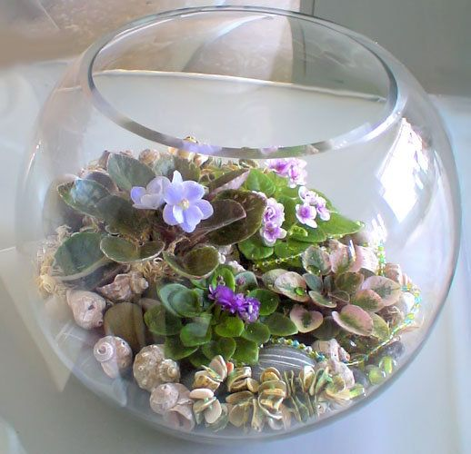 African violets (minis) composition. The miniature AVs are a joy to grow. Sweet little things.
