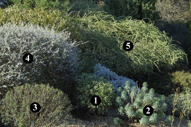 1000 id es sur le th me drought tolerant garden sur for Entretien jardin oleron
