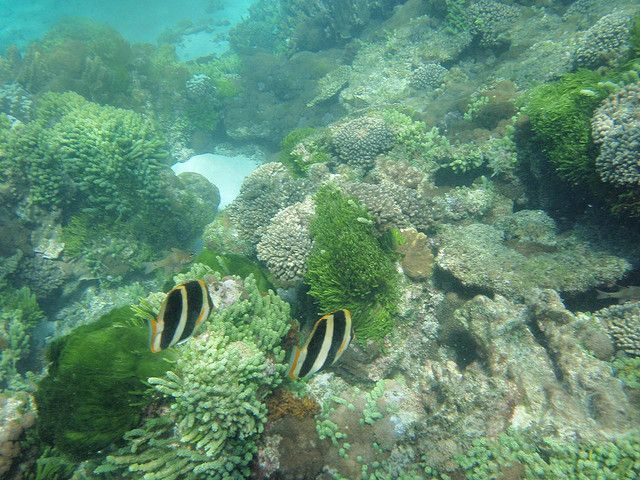 Lord Howe Island marine park - Top 6 Places To Snorkel In Australia - The Trusted Traveller