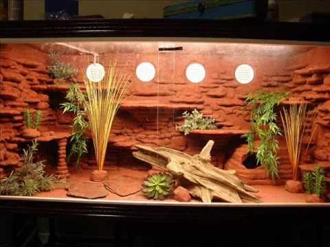 Bearded Dragon tank setup