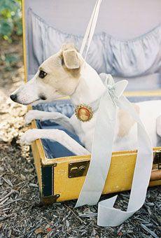 Best 25+ Dog wedding attire ideas on Pinterest | Wedding moments ...