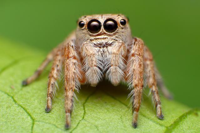 The 6 Basic Invertebrate Groups: Arthropods