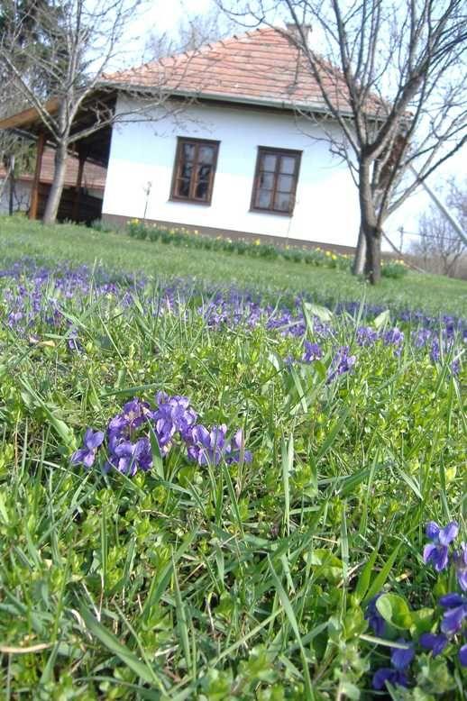 #tavasz
