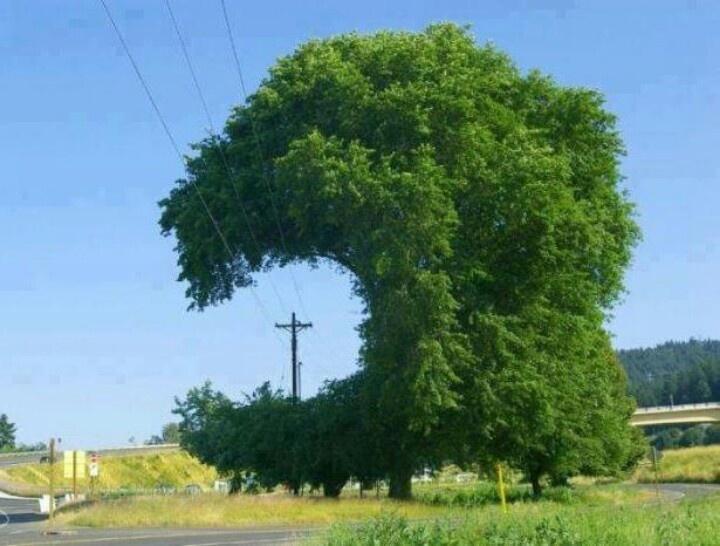 Nature adapting to Powerlines