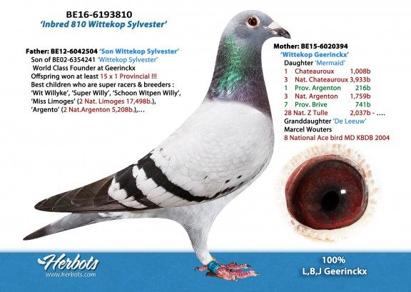 BE16-6193810 • BART VERBEEK