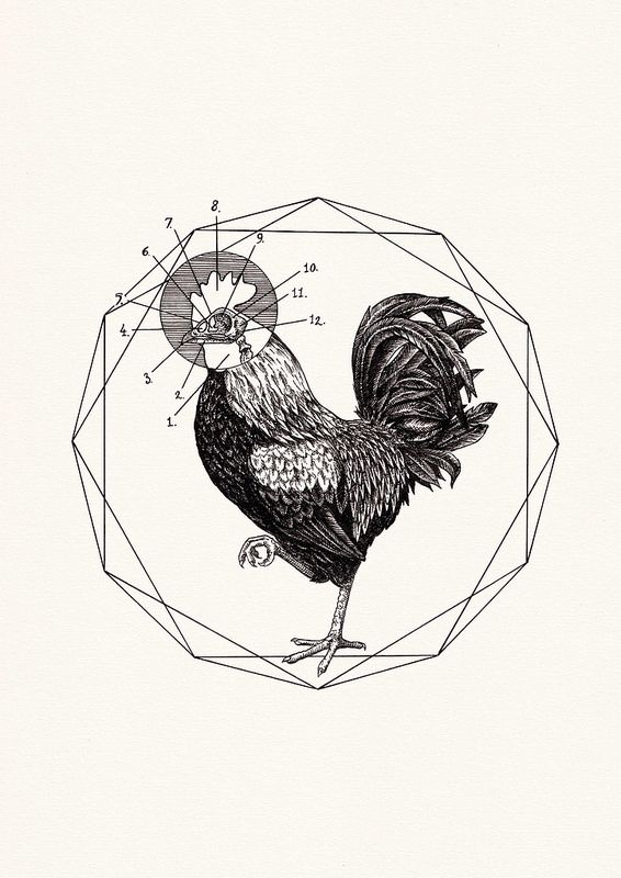 Rooster | Flickr - Photo Sharing!
