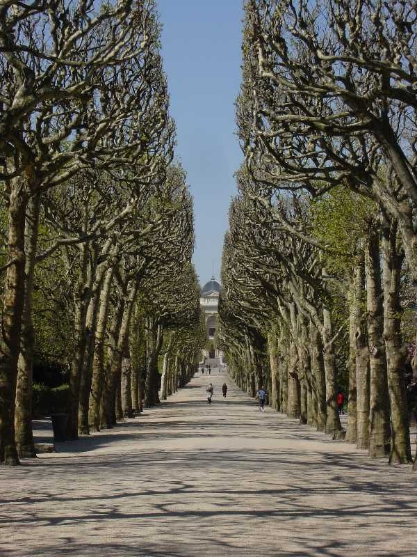 Latin quarter botanical gardens jardin des plantes place valhubert paris v the most - Nenette jardin des plantes ...