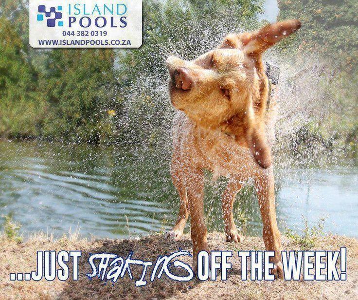 ...just shaking off the week! #IslandPools #FridayFunny