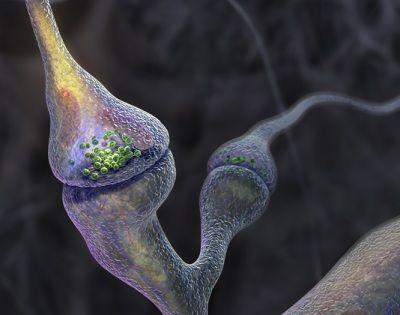 La comunicación de las neuronas en el cerebro de personas con alzhéimer es un 83% menor