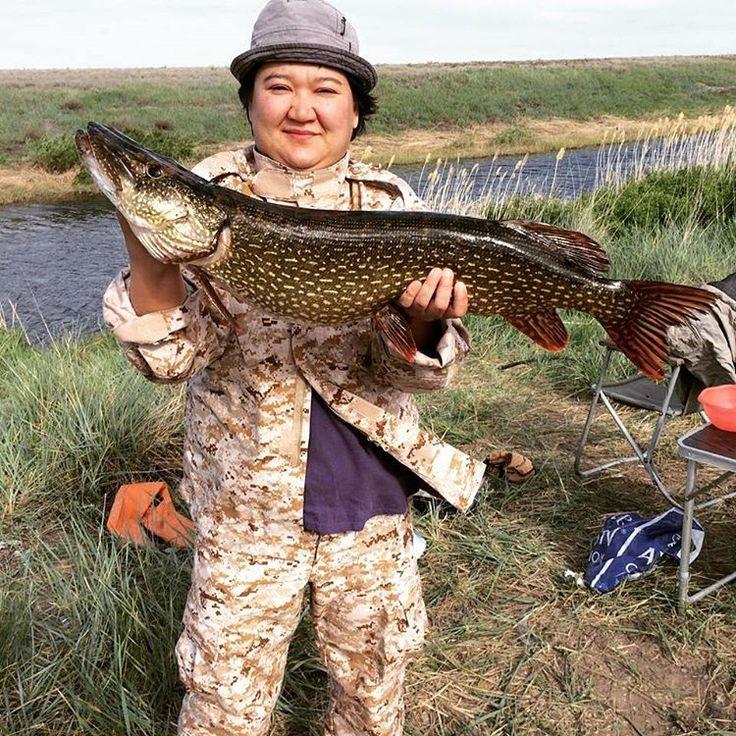 От подписчицы @Asem_nyssa. Рыбалка на щуку в Жезказгане. Река Жыланшык, спиннинг на блесну. #рыбалка #щука #жезказган #охотникикз #fishing #ohotnikikz
