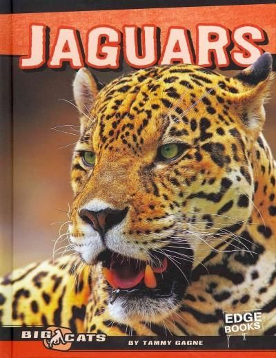 A jaguar watches silently from a rain forest tree as prey draws near below. When…